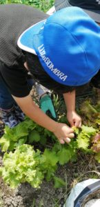 リハビリ発達支援ルームUTキッズ奈良   畑での野菜収穫